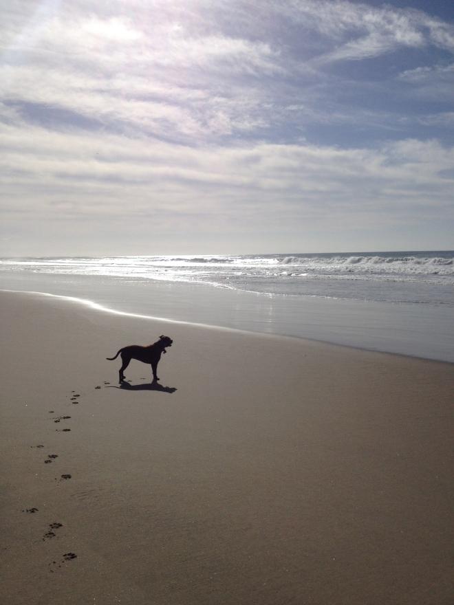 California dog.